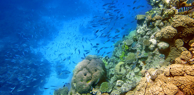Travel to Cairns in Australia   viajeras.com