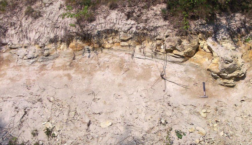 Fósiles de animales en Messel | viajeras.com